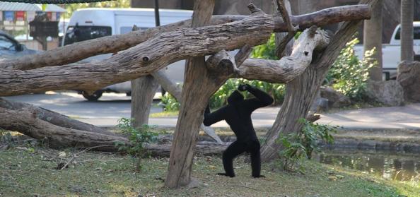 Обезьянка в тайском зоопарке